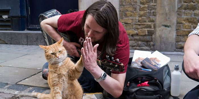 a_streetcat_named_bob.jpg